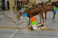 Réparation de cibles animalières